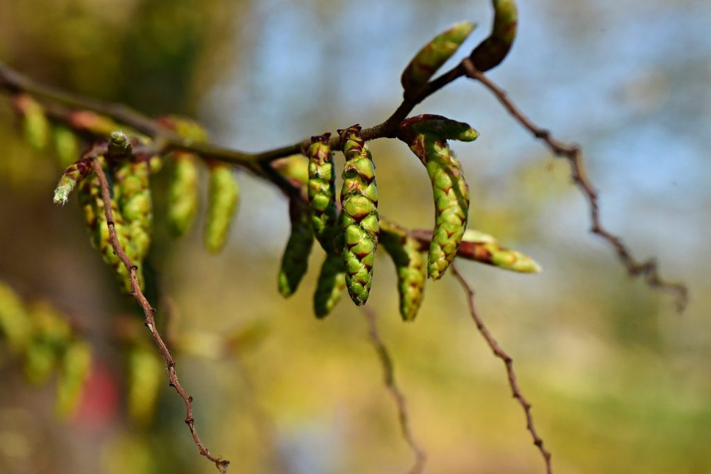 bud, spring, branch